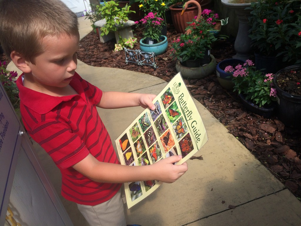 Lukas Nursery and Butterfly Encounter