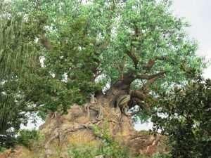 Tree of Life at Walt Disney World's Animal Kingdom