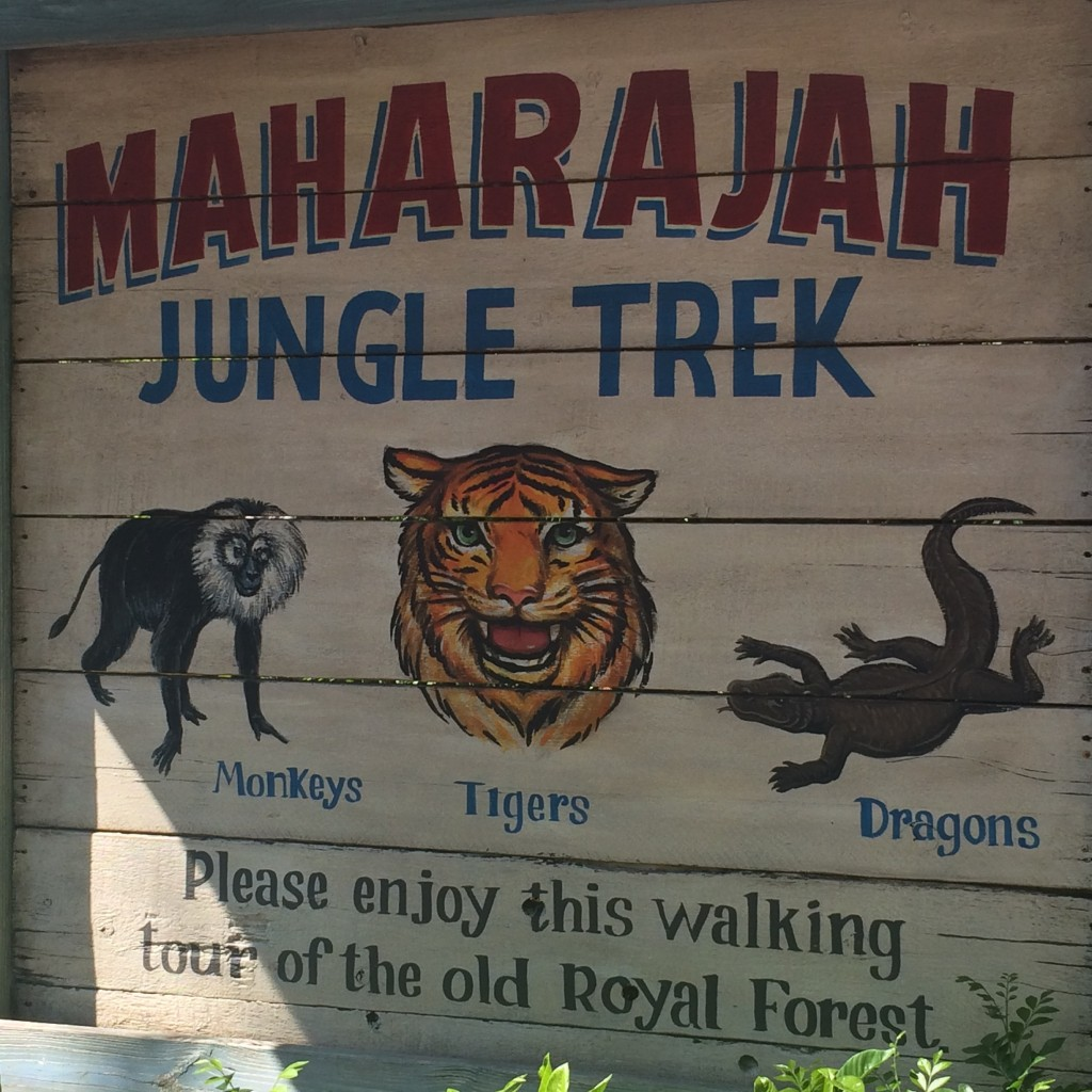 The Jungle Trek at Walt Disney World's Animal Kingdom is a gorgeous stroll that makes you feel like you are in Asia.